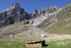 Prvoyance ( foresight ) (Larch) Tags: wood mountain france alps montagne alpes niceshot 74 soe bois woodpile sixt hautesavoie alpage foresight tasdebois concordians sixtfercheval prvoyance oltusfotos mygearandme blinkagain flickrstruereflection1 salvadon chaletsdesalvadon alpagedesalvadon