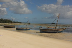 IMG_2240 (danalbrecht) Tags: tanzania pemba 2011 zanzibararchipelago pembatanzania
