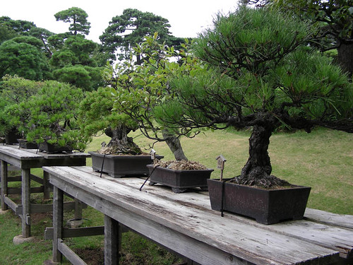 bonsai_tree_art_garden