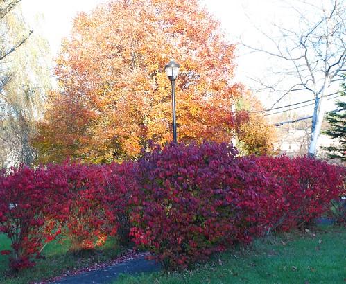 Autumn Beauty - Village