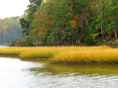 Tidal Flats--Indian Creek (Universal Pops ( Computer Died)) Tags: autumn color nature water leaves season virginia williamsburg change yorktown indiancreek colonialparkway tidalflat sedges topshots natureselegantshots thebestofmimamorsgroups