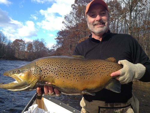 Picture of the day unbelievable brown trout orvis news for Trout fishing ny