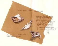 24-10-11 by Anita Davies