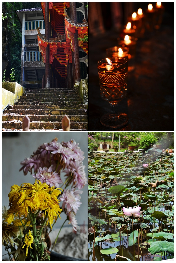 Candlelights, Wilted Flowers, Lotus Pond
