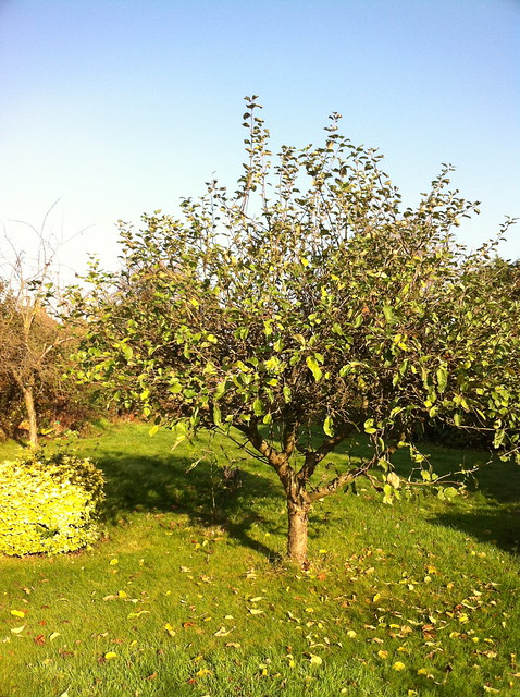 apple tree iphone4