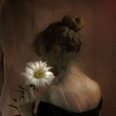 a daisy for you (alejandra baci) Tags: agora deepavali imagepoetry contemporaryartsociety innamoramento alwaysexc absolutegoldenmasterpiece artistictreasurechest visionqualitygroup visionquality100 redmatrix truthandillusion