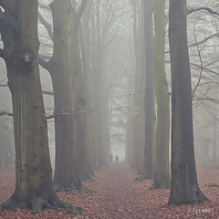 don't go too far ({cindy}) Tags: family autumn trees mist fall leaves forest square woods bare branches silhouettes