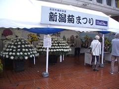 IMGP2072 (naohisa1971) Tags: flower niigata bandai