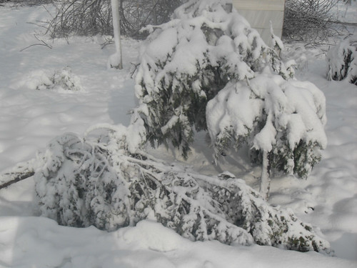 Последствия снегопада в Курган-тюбе (21)