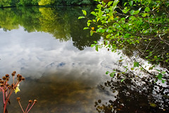 Tiergarten reflections