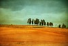 Campo con Alberi (paolo di sarra) Tags: mygearandme artistoftheyearlevel3 musictomyeyeslevel1