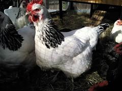 Gardening Turkey