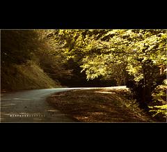 #102_2  ::  autumn in Umbria (CiuPix) Tags: road autumn italy tree foglie strada ray albero autunno luce umbria raggio lighr montecucco allrightsreserved costacciaro canoneos7d piandellemacinare lorenzopierini