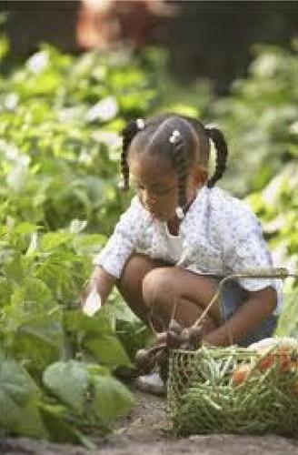 Alachua County on the Move Garden Event