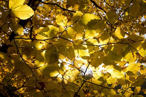 Autumn at Sophienholm