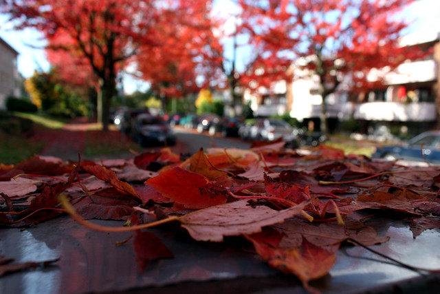 296/365 - Red Leaves