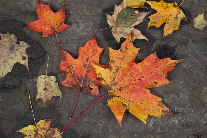 IMG_0466_leaves.jpg