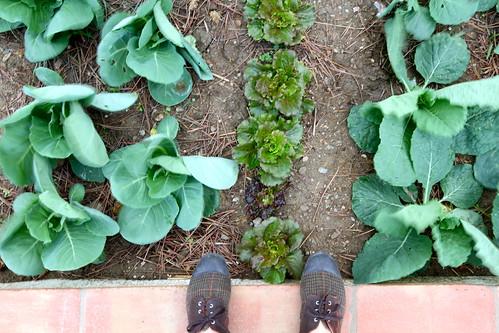 Plantar é bom!