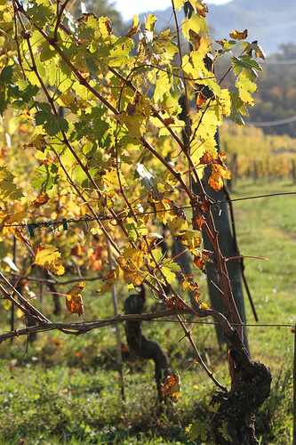 15.winery.1995