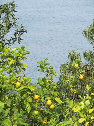 Sea Lemons by JoseAngelGarciaLanda