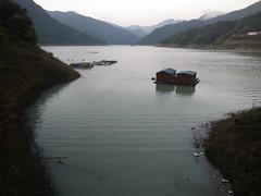 神流湖は、濁ってる。