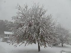 October snow (4)