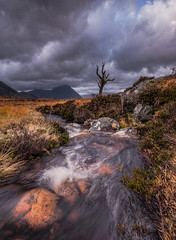 Rannoch Tree... No more (wilsonaxpe) Tags: autumn scotland rannochmoor scottishlandscapes wilsonaxpe therannochtree