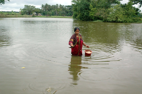 Woman feeding fish in a pond, Bangladesh. Photo by WorldFish, 2008