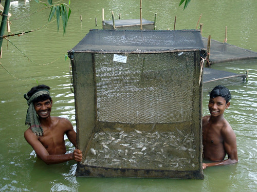 Men fishing, Bangladesh. Photo by WorldFish, 2008