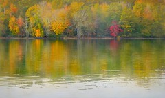 Little Red Tree (floralgal) Tags: autumn lake painterly fall texture leaves reflections pond autumnleaves autumncolors colorfulleaves ryenewyork westchestercountynewyork