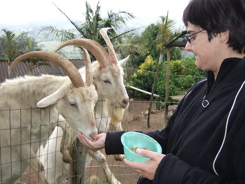 Tracy Feeding The Goats