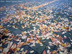 herfst (dietmut) Tags: november autumn trees bomen rotterdam herfst nederland thenetherlands zuidholland hoogvliet 2011 panasoniclumix zalmplaat dmcfx500 dietmut yourfavorites54