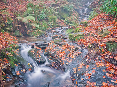 Little falls (w.mekwi photography [on the road]) Tags: longexposure water leaves littlefalls leafy balloch 4x3 valeofleven ballochcountrypark autumnstream nikond90 nikkor18105mm wmekwiphotography