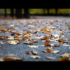 [Il mio] Autunno in Passeggiata (Un ragazzo chiamato Bi) Tags: road autumn leaves foglie pen 50mm asahi pentax takumar f14 olympus m42 leafs smc autunno asfalto ep1 terni 43adapter giardinipubblici lapasseggiata m42tom43adapter takumarautunnoaccoppiataperfetta