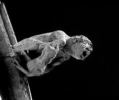 Gargoyle (albireo 2006) Tags: wallpaper blackandwhite bw espaa valencia pain spain mediterranean background gothic pb medieval bn gargoyle espana middleages lonja waterspout lalonja blackandwhitephotos 5photosaday blackwhitephotos comunitatvalenciana lalonjadelaseda