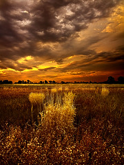 Continuance (Phil~Koch) Tags: morning flowers blue autumn sunset red portrait orange sun green fall love floral field leaves yellow vertical wisconsin clouds sunrise photography landscapes office spring twilight peace earth farm ngc natur scenic meadow inspired naturallight farmland serene agriculture inspirational nationalgeographic horizons environement photocontesttnc11 dailynaturetnc11 philkoch myhorizonart