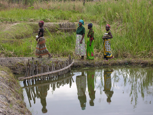 Tiguirizane women at fish pond in Tiguirizane Association, Tsuende village, Moatize District, Tete Province, Mozambique. Photo by Peter Fredenburg, 2008