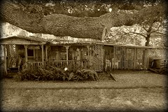 Day 315: Cedar Key Bed and Breakfast Shed (MickiP65) Tags: travel november autumn vacation usa building fall tourism gulfofmexico sepia canon buildings us gulf florida getaway web shed northamerica fl 365 bb 315 fla cedarkey picnik levy allrightsreserved bldg sheds bandb 111111 gulfcoast copyrighted bldgs day315 2011 canoneos30d michellepearson websized naturecoast img005 365daysofphotos 11112011 mickip mickip65 cedarkeybedandbreakfast 20111111 nov112011