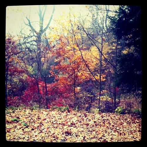 An amazing autumn day