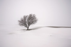 snowstorm on the moor (Spencer Bowman) Tags: winter snow tree minimal snowing