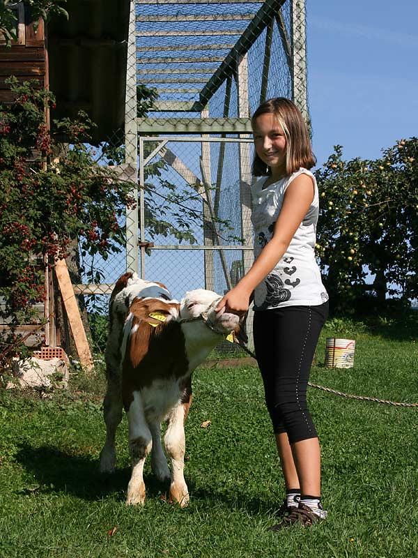 Kirschblütenhof - Mädchen füttert Kalb