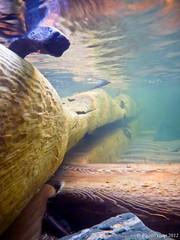Taking it Underwater (PhotoYoop) Tags: green sunrise lumix underwater panasonic emerald lakesuperior rugged dmcts3 pansoniclumixdmcts3