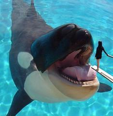 Sacrifice 1 (Stefanos1313) Tags: sea woman girl animals tongue mouth giant jump soft teeth maw whale orca vore