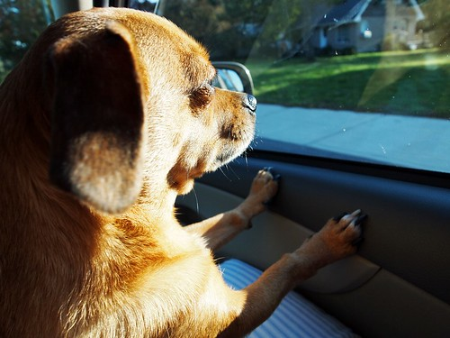 road trip - looking out the window