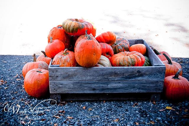 Pumpkins 114