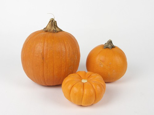 appropriately sized pumpkins