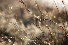 Morning sun [explored] #25 (Sascha) Tags: bokeh sylt sonne morgen wassertropfen