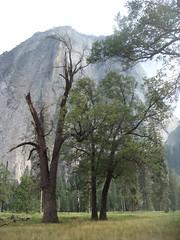 Yosemite Valley (Ale Vignoni) Tags: ale vignoni sonyt200