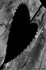Pierced Black Heart(Spades) (fotigrafu) Tags: pierced blackandwhite bw blancoynegro contrast mono blackwhite saw europa europe heart noiretblanc eu olympus coeur an sierra pica romania contraste sega sw conceptual blackheart ro olympuspen kontrast cuore herz corazón biancoenero spades pik ue ep1 roumanie concettuale picas contrasto säge kreissäge circularsaw bwconversion harshlight luzdura extremecontrast picche piques conceptuel inima scie albnegru schwarzundweiss conceptualphotography sierracircular fotoconceptual fotografiaconcettuale lucedura segacircolare lumièrecrue konzeptuellefotografie sciecirculaire contrastextrem olympusep1 olympuspenep1 fotografieconceptuala stapunsa ferastrau fierastraucircular luminadura grellelicht konzeptuellen inimaneagra konzeptuellenfoto fotigrafu