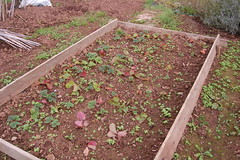 2011 10 16_allotment_0004